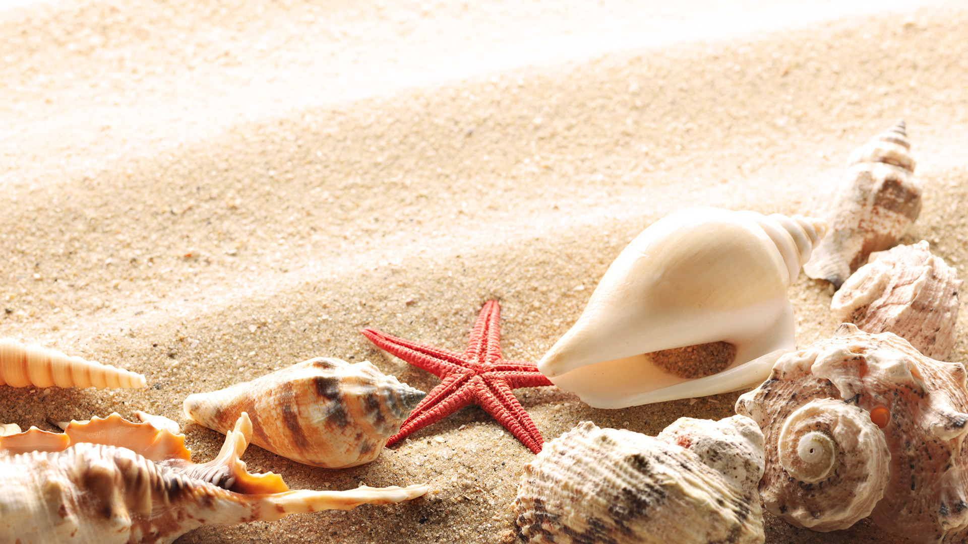 Wallpaper-seashells-summer-beach-sand-sun-theme-macro-download-132777-1920x1080.