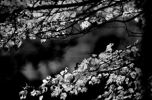 10-black-white.jpg