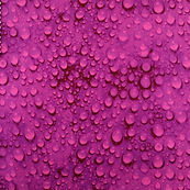 26693 Purple Raindrops.JPG
