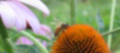 Devotion Bee.jpg