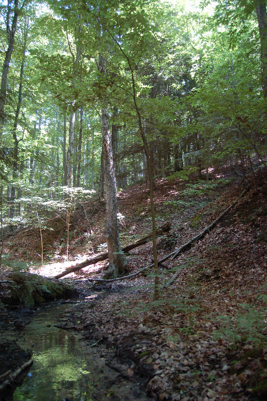 The Creek running through our woods