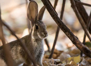 Blog March Day 2: Christiana Gaudet - The Bunny in the Bramble Patch