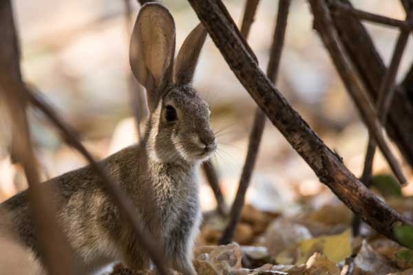 a bunny rabbit in nature