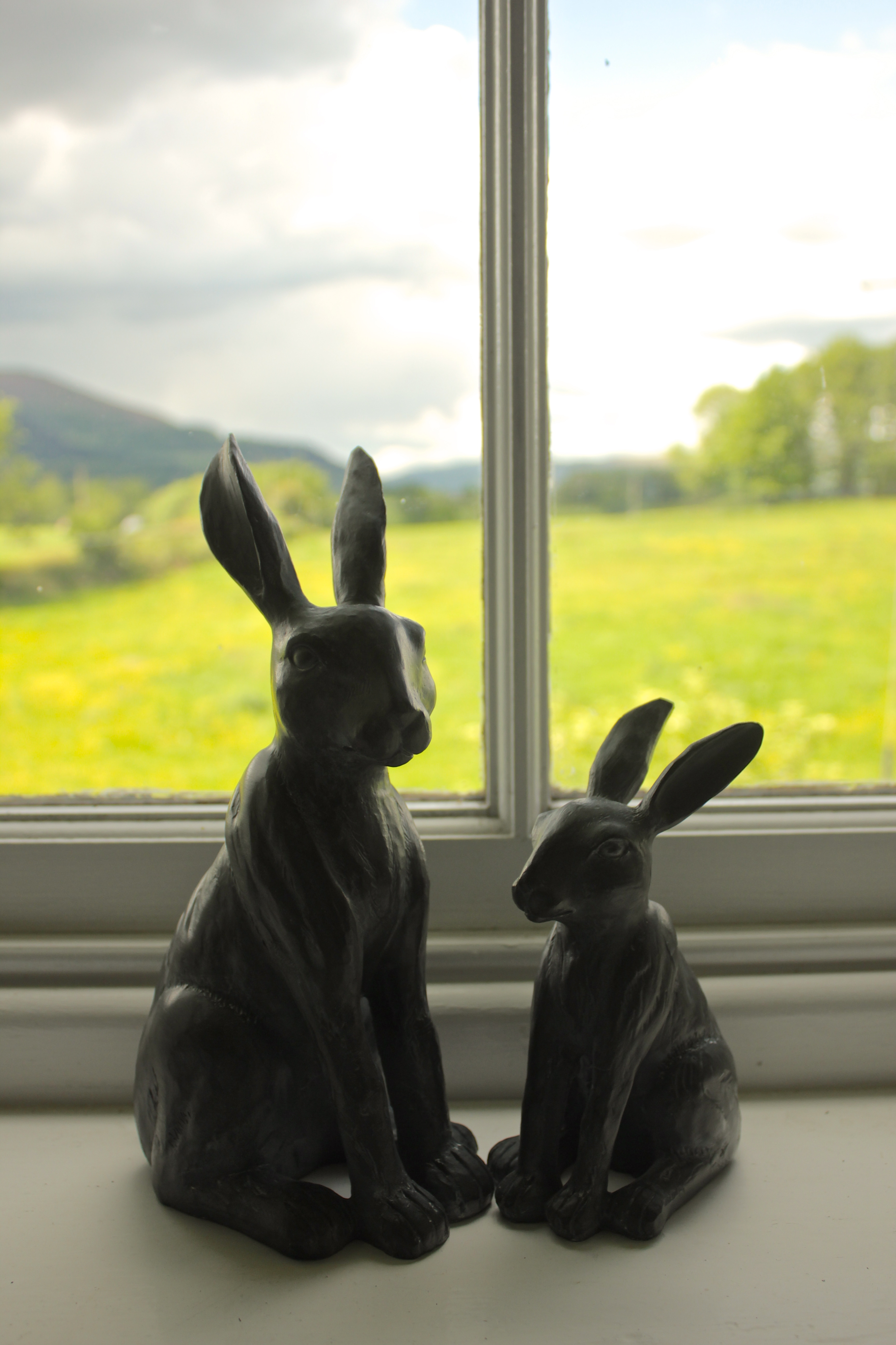 hares and view