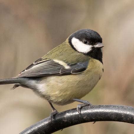 Spring Garden: Battle for the Nest