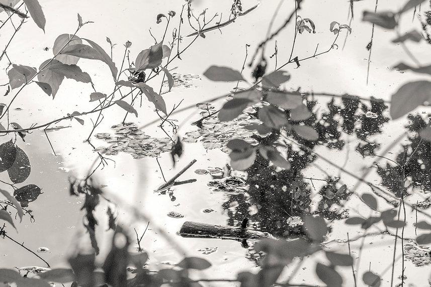 Solitude Series.jpg