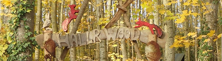 Hallr Woods Forest School