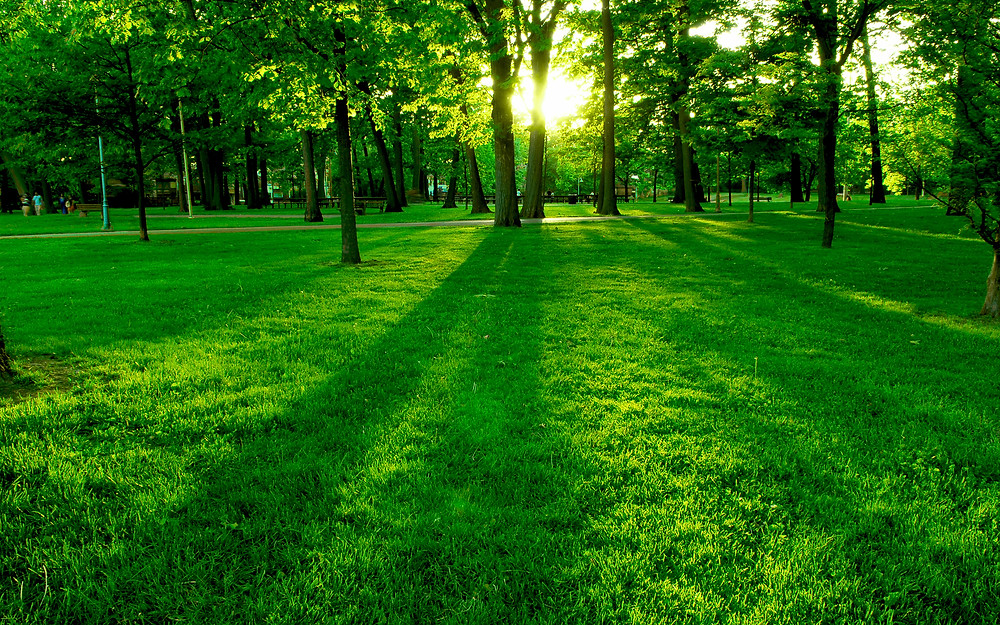 Spring green lawn