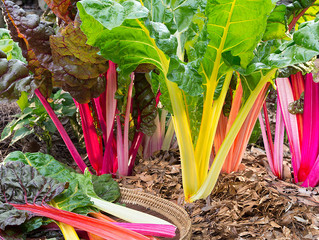 December garden tips.