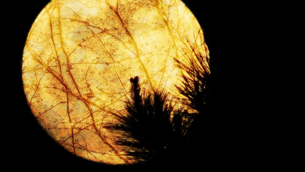 Moon Header.jpg