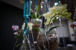 Hanging Garden 6