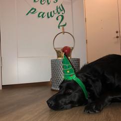 Dog Birthday Banner.jpg
