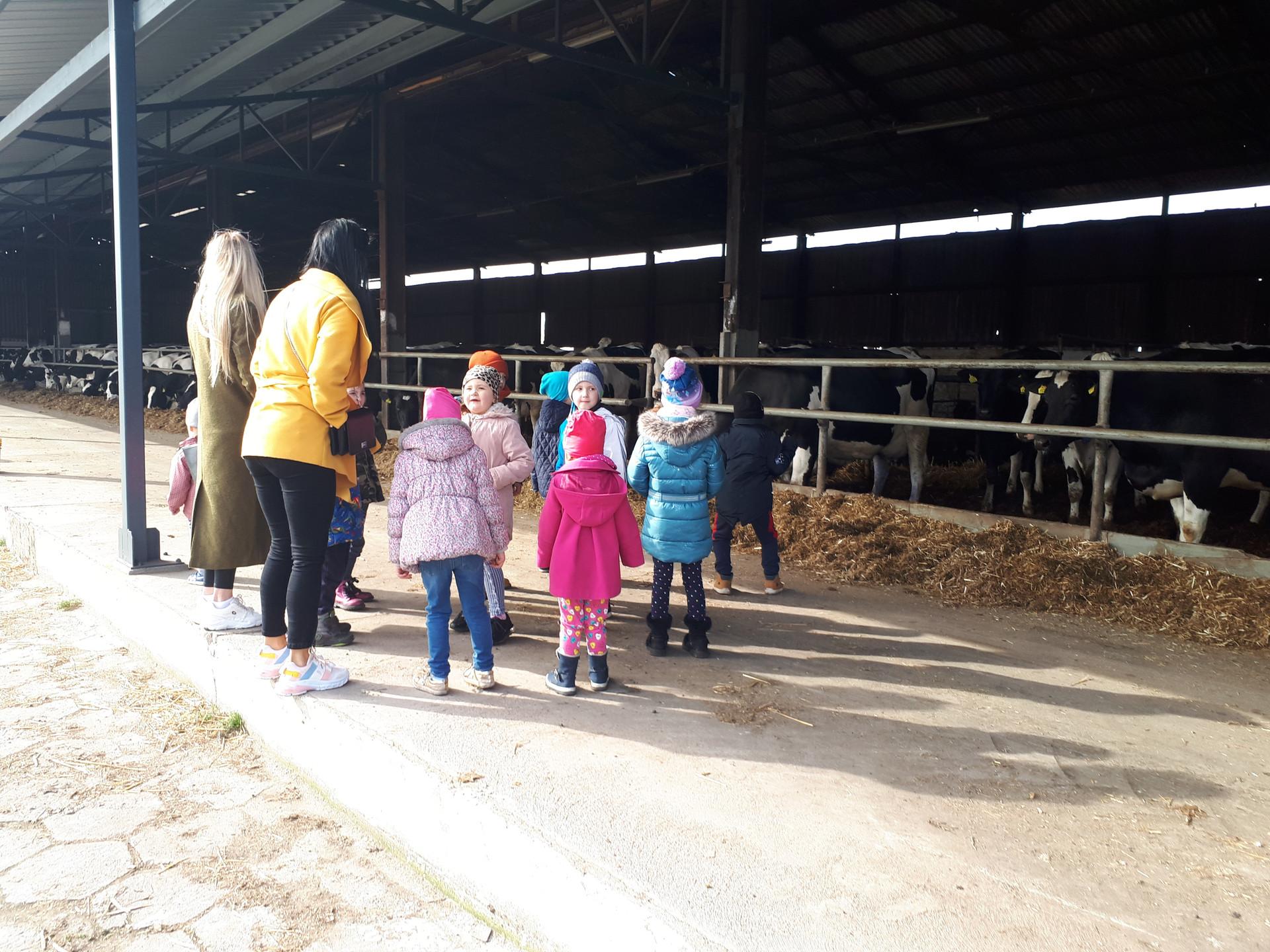 Wizyta przedszkolaków na fermie w Przyczynie Górnej