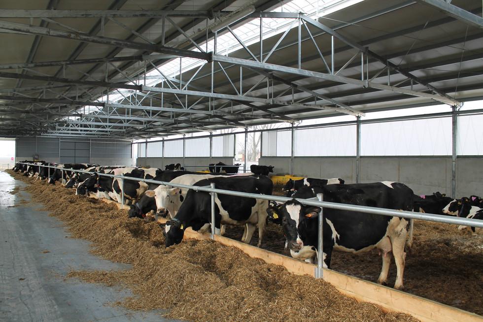 Nowy obiekt dla krów i jałówek na fermie w Osowej Sieni