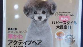 Dog  hair  collection 発売🐶