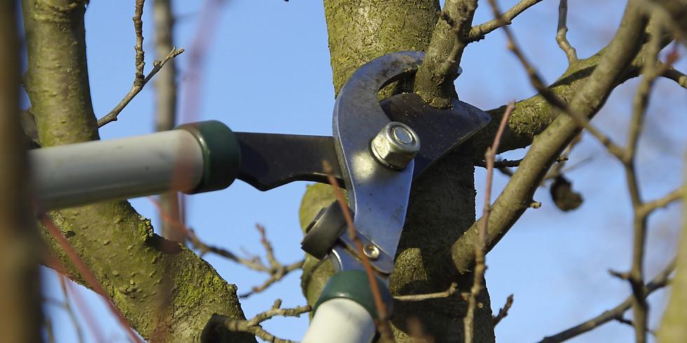 Pruning Fruit Trees (FREE!)
