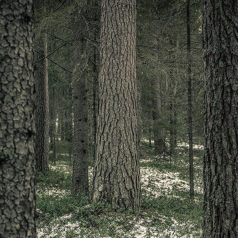 Winter Tree I.D. (FREE!)