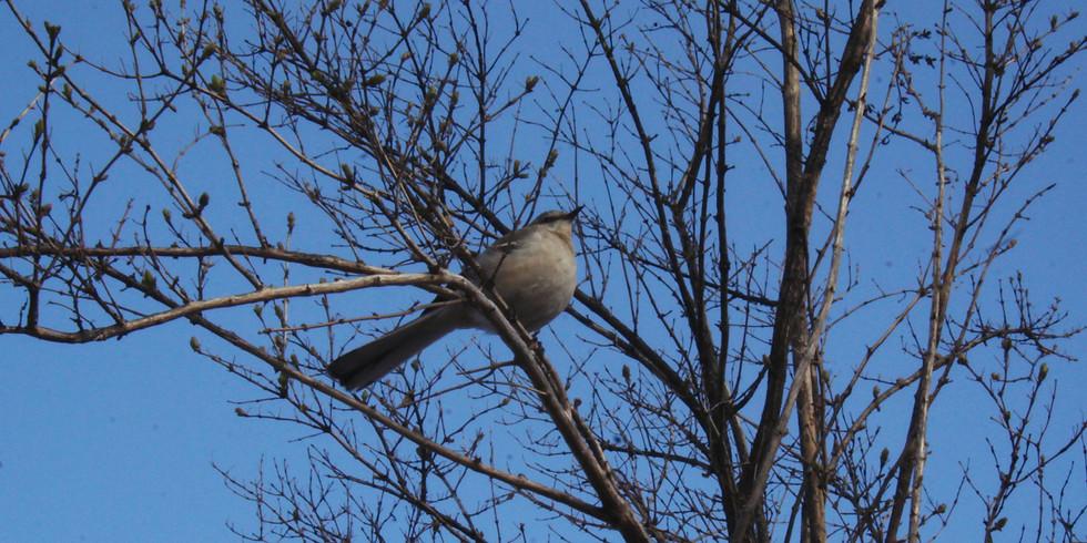 Wild Bird Identification (FREE!)