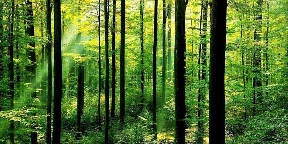 Tree Identification (FREE!)