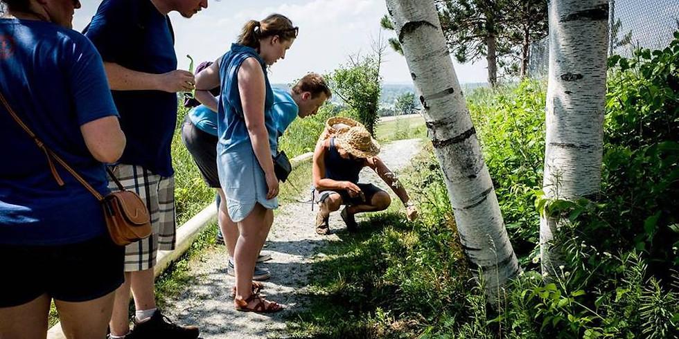 Wild Edibles Walking Tour (Tuesday 7/31)