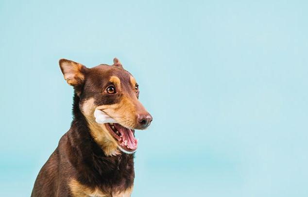 12_#sweetdog #dogwalking #doglover #dogf