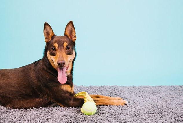 12_#urbandogs #dogs #dogsofnyc #poodle #