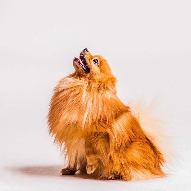 6_._#caninestyle #puglove #pugsofinstagr