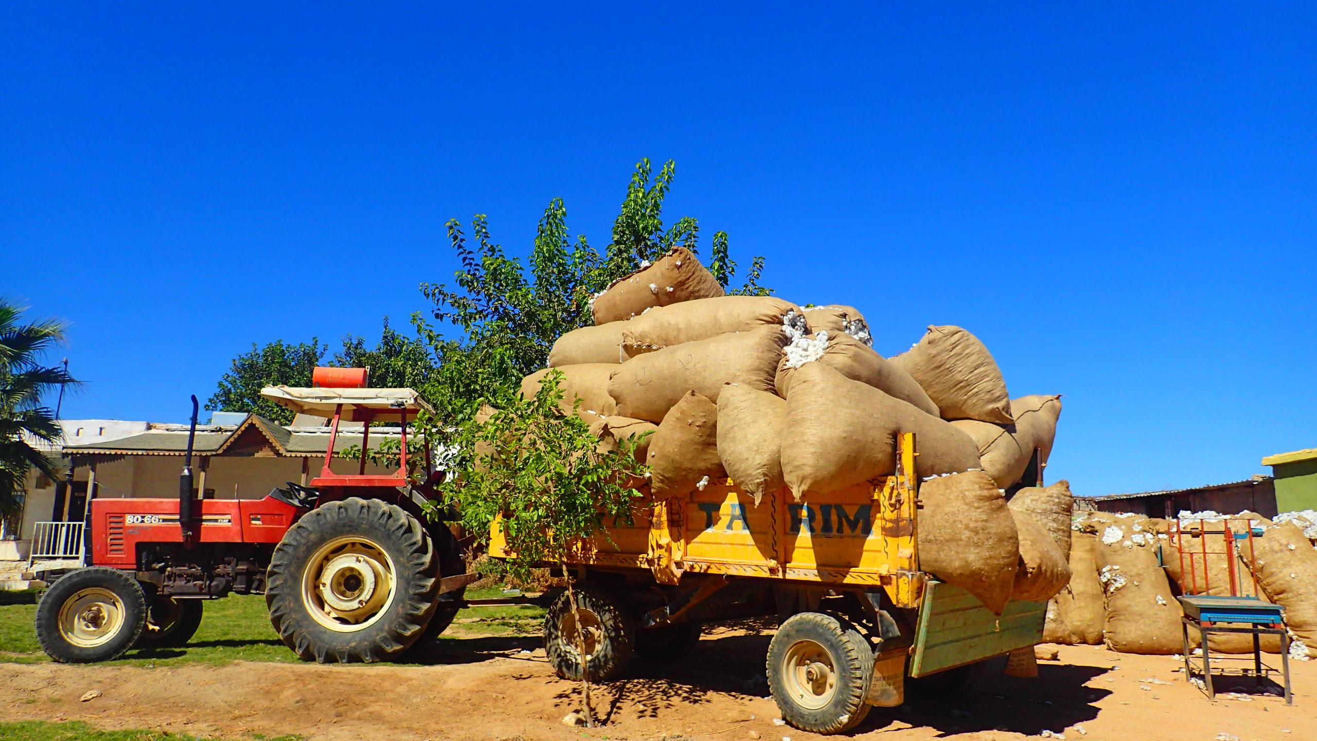 収穫したコットンを運ぶトラック