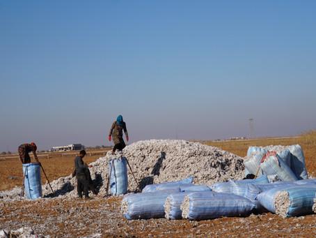 綿花の収穫を終え、教室に再び溢れる笑顔