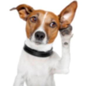 approach-dog.jpg