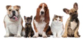 PetsRow.jpg