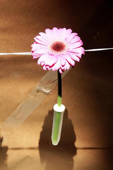 13_rurarc_temps_de_flors_arquitectura_ef