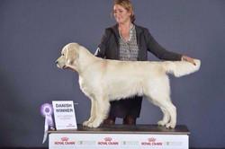 GEMBÆK Golden Retriever | Stud Dogs