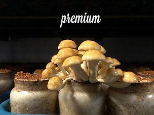 puremiumなめこ.jpg