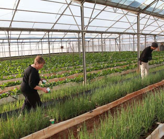 BioCloud 618 in the greenhouse