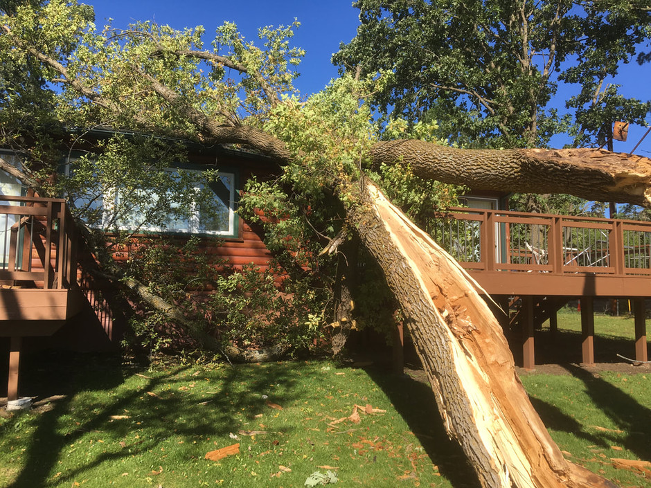 Who is Liable When a Tree Falls on a Neighbor's Property?