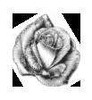 RoseSansFond.png