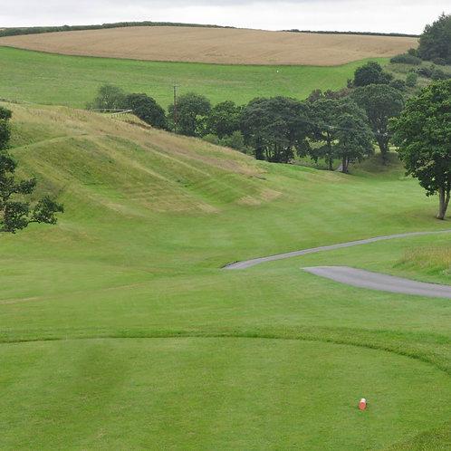 Perennial Golf Tee Grass Seed