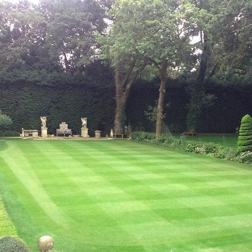 Croquet Lawns Grass Seed (No Ryegrass)
