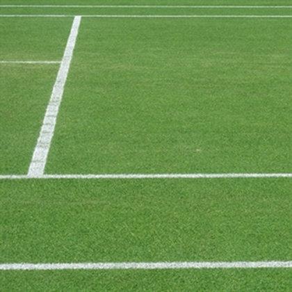 Premium Tennis Courts Grass Seed