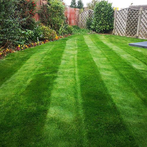 Hardwearing Grass Seed