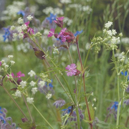 P4 Hedgerows Wildflower Seed 100%