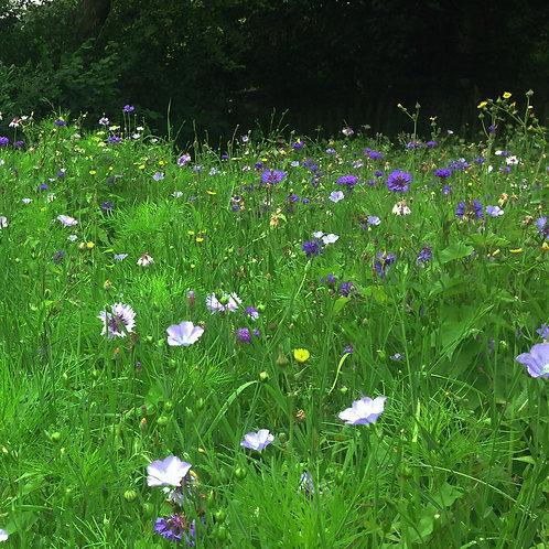 HC8 Deep Purple Wildflower Seed 100%
