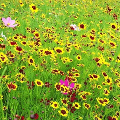 HC7 Butterfly Paradise Wildflower Seed 100%