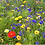 Thumbnail: HC2 Candy Floss Wildflower Seed 100%