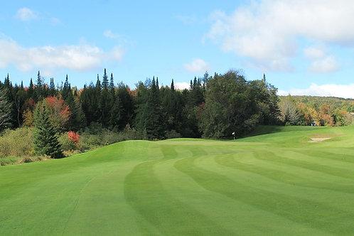Ryegrass Golf Fairways Grass Seed
