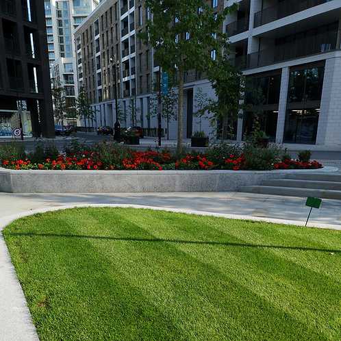 Shaded Areas Grass Seed