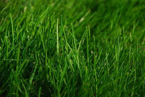 Heathland, Acidic & Peat Soils Grass Seed