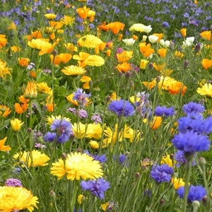 Adding a splash of colour with Wildflowers