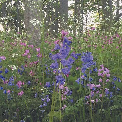P5 Woodland& Heavy Shade Wildflower Seed 100%